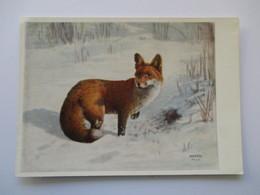 Renard Red Fox  H Frey - Animals
