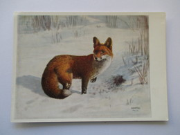 Renard Red Fox  H Frey - Animaux & Faune