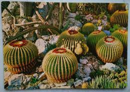 PRINCIPAUTE DE MONACO - Le Jardin Exotique - Echimocactus Grusonii - Plante Succulente - Cactus - Vg 1967 - Autres