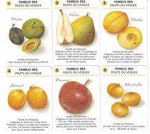 6 CARTES DU JEU DE 7 FAMILLES FAMILLE DES FRUITS DU VERGER PRUNE POIRE PECHE ABRICOT POMME CIDOUX JUS DE FRUITS - Cartes à Jouer Classiques