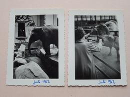 ZOO Van ANTWERPEN / Anvers / Antwerp / Amberes ( Formaat Grootste +/- 9,5 X 7 Cm. ) 5 Foto's > 1952 ! - Lieux