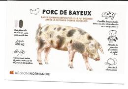 PORC DE BAYEUX COCHON - Cochons