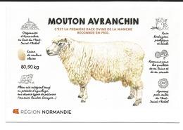 MOUTON AVRANCHIN RACE ORIGINAIRE D AVRANCHES BAIE DU MONT SAINT MICHEL - Veeteelt