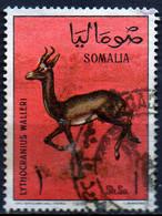 PIA - SOMALIA - 1967: Gazzella : Lithocranius Walleri    - (Yv  64) - Somalie (1960-...)