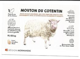 MOUTON  DU COTENTIN - Veeteelt