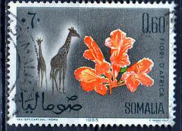 PIA - SOMALIA - 1965: Animali E Fiori Africani : Giraffe E Spathodea Milotica     - (Yv  43) - Somalie (1960-...)