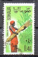 PIA - SOMALIA - 1961: Indigena Che Raccoglie Canne Da Zucchero    - (Yv  13) - Somalie (1960-...)