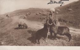 AK - Rumänischer Schafhirte - 1910 - Rumänien
