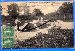 CPA 33 - L'Industrie Landaise Sur La Côte D'Argent - MONTALIVET-les-BAINS - Graine De Pignes - France