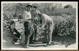 1941 REAL PHOTO FOTO PIG INSEMINATION PAIOES SINTRA PORTUGALPOSTCARD CARTE POSTALE - Lisboa
