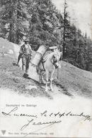GEBIRGSPOST → Saumpferd Im Gebirge, Ca. 1904 - Suisse