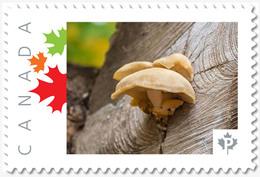 MUSHROOM On LUMBER LOG = Picture Postage Stamp MNH-VF Canada 2019 [p19-02sn17] - Mushrooms