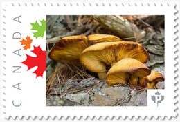 MUSHROOMS = Picture Postage Stamp MNH-VF Canada 2019 [p19-02sn18] - Mushrooms