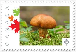 MUSHROOM = BROWN = Picture Postage MNH-VF Canada 2019 [p19-02sn19] - Mushrooms