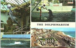 Animals - Multi View, The Dolphinarium - Dolphins