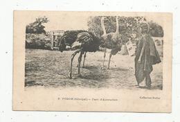 Cp , SENEGAL ,PODOR ,parc D'Autruches , Collection Duffau , Vierge - Senegal