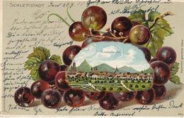 67) SELESTAT - SCHLETTSTADT : Carte Gauffrée - Grappe De Raisin (1905) Vigne - Selestat