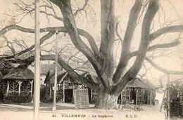 78. CPA. VILLENNES.  Le Sophora.  Avec Explications Arbre Importé Du Japon. 1922. - Villennes-sur-Seine