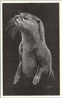 Animals - Art, Otter - Animals