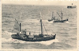 CPA - Belgique - Zeebrugge - Retour De Pêche - Zeebrugge