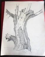 Vintage  Dessin Un Tronc D'arbre Mort Dessinée Au Fusain Ou Crayon Noir Sur Papier Type Canson Faire Défiler Scanns - Gouaches