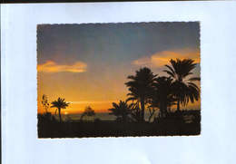 Lebanon - Postcard Circulated And Written In 1971 - Sunset At The Lebanese Coast - 2/scans - Liban