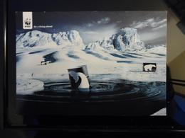 RARE WWF Carte Postale - Advertising