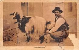 Malta   A Maltese Molkman Goat   I 5802 - Malta