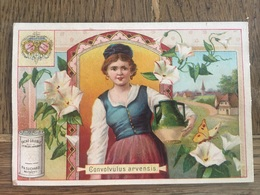 CHROMO CHOCOLAT SUCHARD S53 1897 Flower Girls Femmes Fleurs Gonvolvulus Arvensis Liseron - Suchard