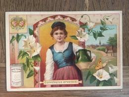 CHROMO CHOCOLAT SUCHARD S53 1897 Flower Girls Femmes Fleurs Gonvolvulus Arvensis Liseron (Bis) - Suchard