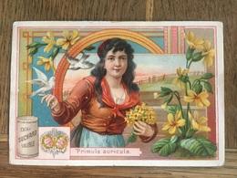 CHROMO CHOCOLAT SUCHARD S53 1897 Flower Girls Femmes Fleurs Primula Auricula - Suchard