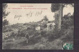 CPA ESPAGNE - PUIGCERDA - Seria De Cerdana - Bueyes Paciendo En La Montana - TB PLAN Troupeau Vaches - Espagne