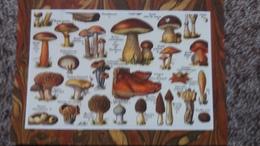 CPM  CHAMPIGNON CHAMPIGNONS PLANCHE BOLET  MORILLE PEZIZE LANGUE DE BOEUF HYDNE TRUFFE - Mushrooms