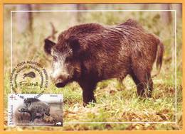 2018 Moldova Moldavie Fauna Nature, Nature Reserve. Forest. Animals. Boar. Maxicard - Cartes-maximum