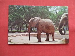 African Elephant  Brookfield Zoo  Il   Ref 3198 - Elefanten