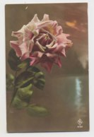 AI15 Flowers - Pink Rose - Flowers, Plants & Trees