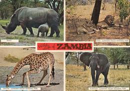 ZAMBIA - Wild Life Of Zambia - Zambia