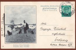 YUGOSLAVIA-SERBIA, VOJVODINA-STOCKRIDER-DOG, 4th EDITION ILLUSTRATED POSTAL CARD - Ganzsachen