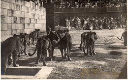 QUO  VADIS  ,  Film Muto  Del 1924  Regia Gabriellino  D Annunzio  E  Georg Jacoby - Acteurs