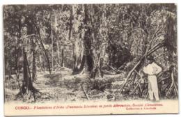 Congo - Plantations D'Irehs En Forêts Débroussées - Société Alimaïenne - Congo Français - Autres