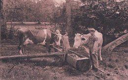 Vaches à L'abreuvoir, Bassin En Bois (8102) - Elevage