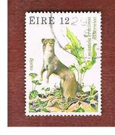 IRLANDA (IRELAND) -  SG 461   -    1980  ANIMALS: MUSTELA ERMINEA   -     USED - 1949-... Repubblica D'Irlanda