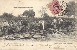 La Récolte Du Tabac - La Vie Aux Champs En Périgord - Bergerac