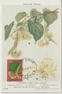 Yougoslavie Carte Maximum Plantes 1955 Tilleul 670 - Cartes-maximum