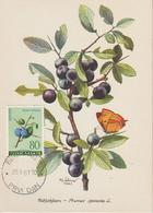 Yougoslavie Carte Maximum Flore 1961 Prunelle 850 - Cartes-maximum