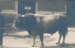 I77 - 38 - GRENOBLE - Isère - Carte Photo - Concours Agricole Grenoble 1924 - M. Odemard Amédée à Méaudres - Grenoble