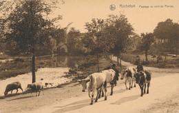 CPA - Belgique - Rochefort - Paysage Au Pont De Pierres - Rochefort