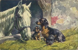 TECKEL - Dachshund ( Fenertag ? )  Paard - Cheval - Horse - Dogs
