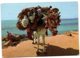 Burro Botijero - Donkeys