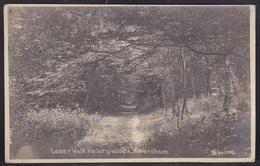 Great Britain - Buckinghamshire - Amersham - Lower Walk, Rectory Woods - Real Photo Posted 1929 - Buckinghamshire